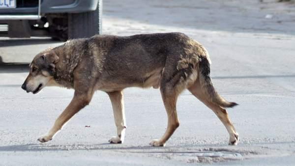 Un perro boliviano sigue llorando a su dueño en el lugar en que murió hace cinco años