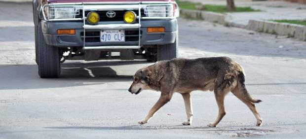 Un perro aún espera a su dueño fallecido