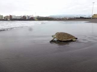 'Quelonia' puede por fin regresar al mar