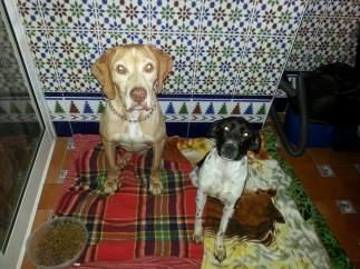 Dos de los perros rescatados