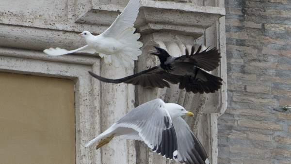 Un cuervo y una gaviota atacan a una paloma