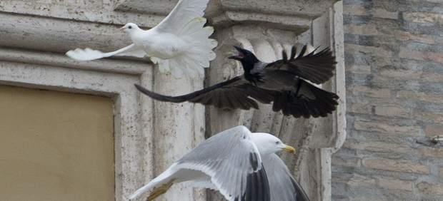 papa - Una gaviota y un cuervo atacan una paloma por la paz de Ucrania del papa Francisco 156570-620-282