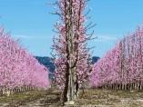 El primer aviso de la primavera cae en Cieza