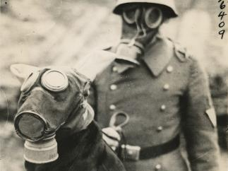 'German War Dogs', from the New York Journal-American