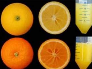 Naranjas con más antioxidantes