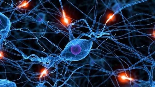 """""""Para ejercitar el cerebro la clave no es hacer siempre crucigramas o sudokus"""""""
