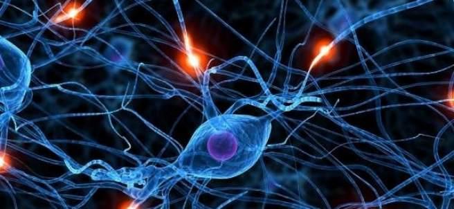 Actividad neuronal