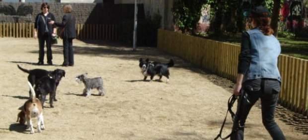 Perros en un parque de Barcelona