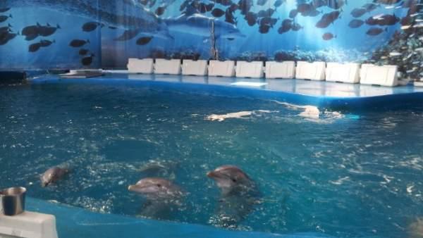 Dofins al Zoo de Barcelona