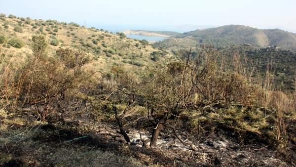 Incendio en Colera