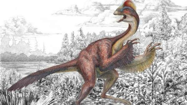Dinosaurio Pollo del infierno