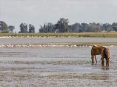 Humedales: un recurso mal conservado en España
