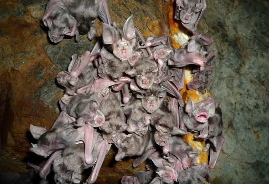 Los murciélagos infunden ciertos temores en los humanos
