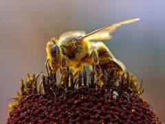 Confirman que la población de insectos voladores ha disminuido en un 75% en los últimos 27 años