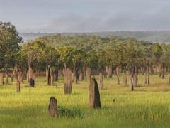 Torres de termitas
