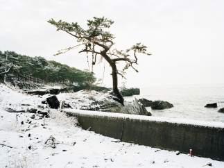 'Kesennuma, Hajikamiiwaisaki, Miyagi Prefecture', 2012