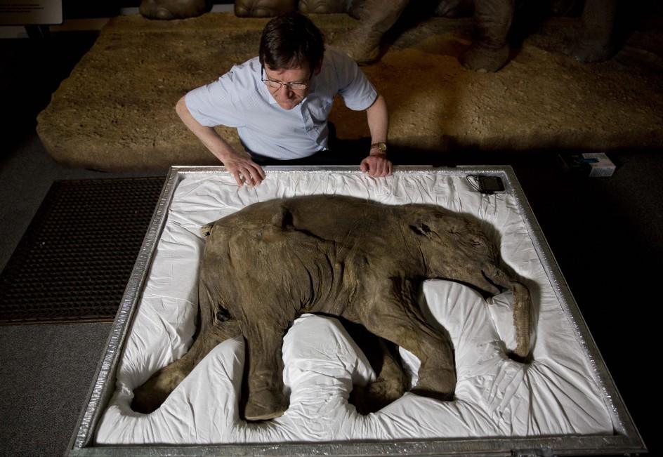 La cría de mamut mejor conservada