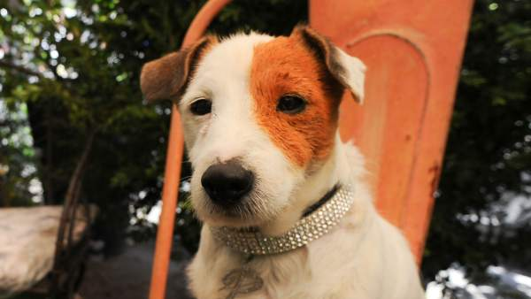 El perro Pancho.