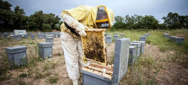 SOS abejas.