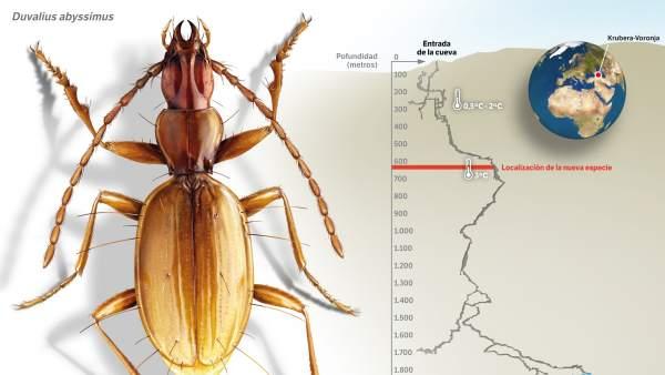 Nueva especie de escarabajo