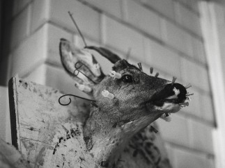 """Andrei Liankevich Untitled, aus der Serie """"Fake Animals"""", Grodno/Belarus 2010"""