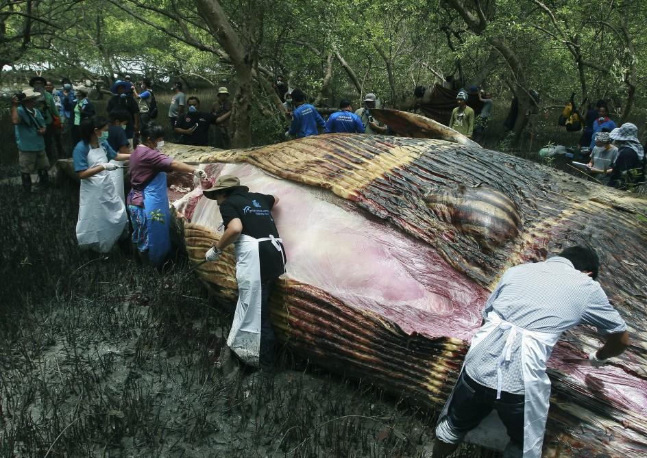 Encuentran una ballena varada en Tailandia