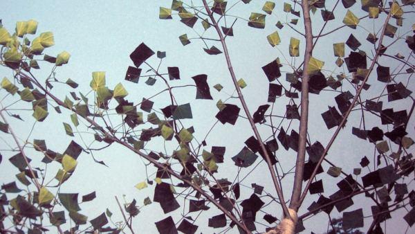 'Tree'