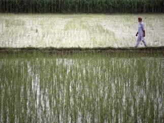 Agricultura india
