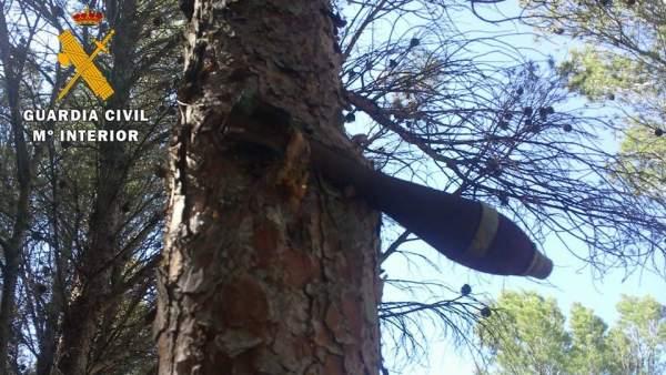 Bomba de la guerra civil incrustada en un árbol desde hace 70 años