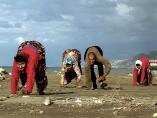 Familia de cuadrúpedos en Turquía