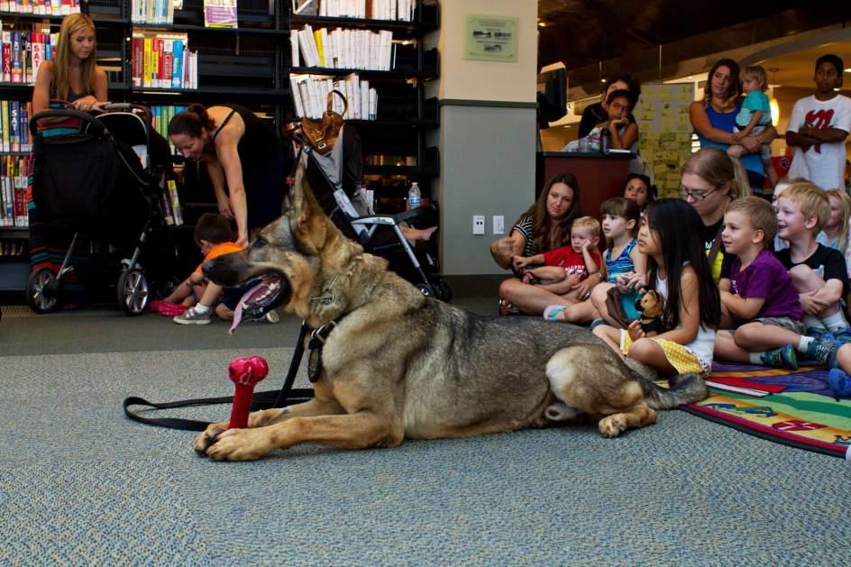 La lectura y los animales, buenos aliados para el verano