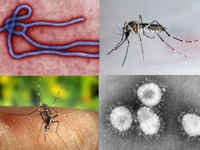 Ébola, malaria, dengue y coronavirus