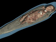 'CT scan 3D visualisation of the mummified remains of Tayesmutengebtiu'