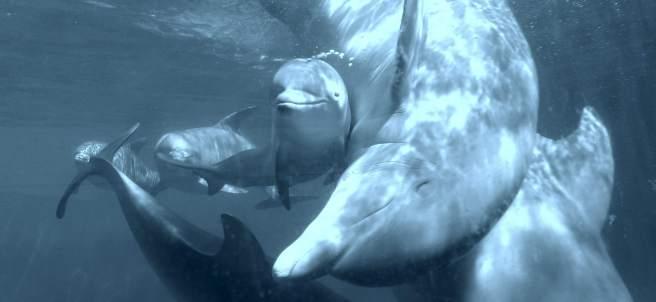Más delfines para el zoo de Madrid