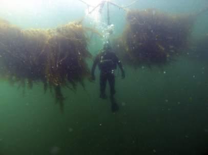 Cultivo de algas a gran escala