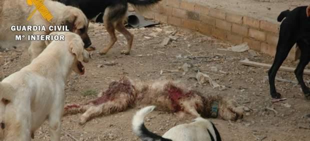 Protectora de animales clausurada en Zaragoza