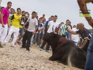Muerte del toro Elegido en Tordesillas