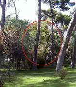 Ca�da repentina de dos ramas en el Retiro