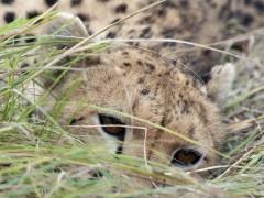 Un ni�o de un pueblo de Teruel gana el premio infantil de Londres de fotos de fauna salvaje