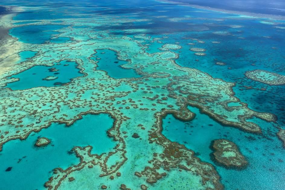 Proyecto para recuperar la Gran Barrera de Coral