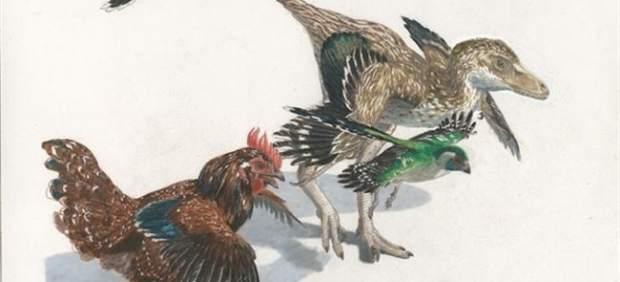 Resultado de imagen de transicion dinosaurio ave