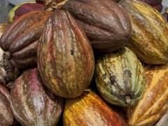 Reemplazar bosque tropical por aceite de palma, cacao o caucho aumenta las emisiones de CO2