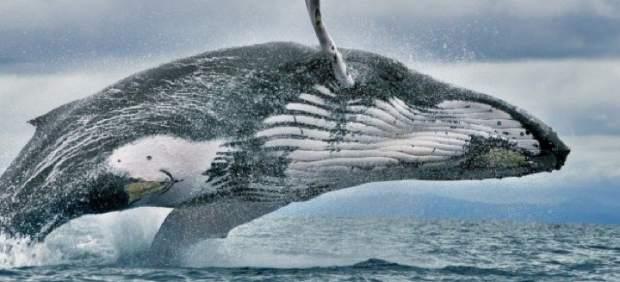 Ballenas en el Pacífico de Panamá