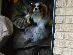 'Bentley', el perro de Nina Pham