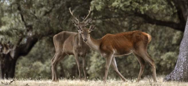 Uno de los bosques mejor conservados de Europa