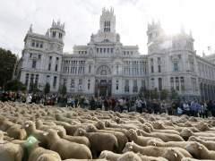 Carmena quiere introducir un rebaño de ovejas permanente en la Casa de Campo para prevenir incendios