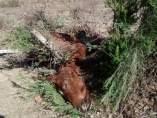 Caballos muertos en Vizcaya