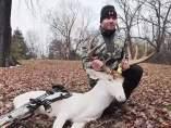 Ciervo albino muerto