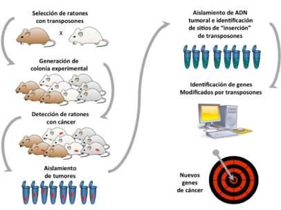 Nuevos genes facilitan el diagnóstico del cáncer de páncreas