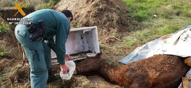 Imputan a un hombre de Huesca por maltratar a un caballo